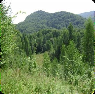 image0141
